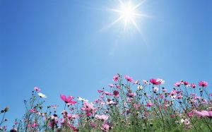 1440x900_Blue_Sky_Flowers_HM030_350A
