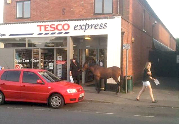 tesco horse