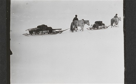 British Antarctic Expedition 1910-13: Ponies on the march, Great Ice Barrier, 2 December 1911 (Robert Falcon Scott/ Scott Polar Research Institute)